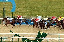 04/03/2014 - Chantilly - Prix Meydan Race Course : Arrivée